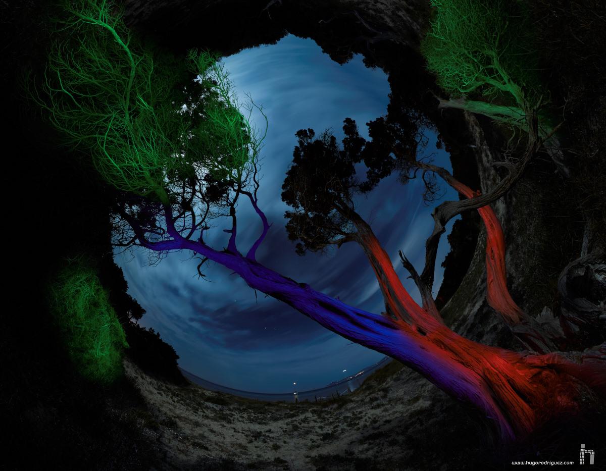 Pano Arbol Savina nocturna Ilum Polar D sRGB