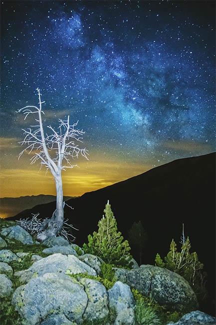 arbre nu sota via lactia-p XCMYK Negro absoluto